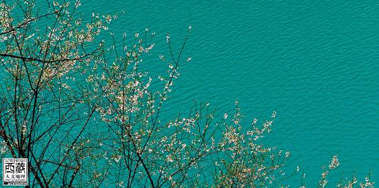 在湖边盛开的花儿