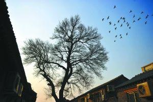 """从一降生,就在老北京城的胡同里生活――""""在护城河边,玩耍""""。"""
