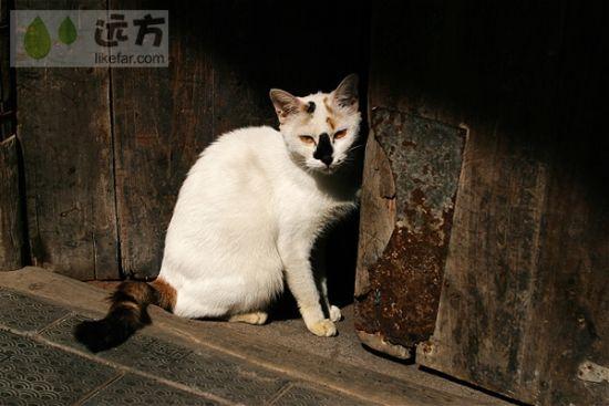 骑楼下的猫咪 图片来源:远方网
