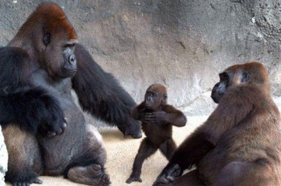 照片拍摄于迈阿密动物园.