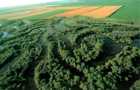 三江平原的沼泽多为潜育化沼泽,约占沼泽面积的85%,泥炭沼泽少,仅占15%,但泥炭储量丰富。泥炭是一种自然资源,可用于农业、工业和医药卫生以及建筑业;沼泽地区有发展农、林、牧、副、渔多种经营的优越条件。在土壤肥沃、日照充足、水草丰盛的地块上,可以发展农业生产,现已成为黑龙江省重要的农垦区。有的地块还可以改沼育林、辟为牧场。沼泽中还有一部分芦苇沼泽,面积逾1000万亩,芦苇蕴藏量约40万吨,是造纸和人造纤维的重要原料。此外,沼泽中还有不少药用植物。改造沼泽需要排水、整治河道、进行沼泽土壤的改良,在开发
