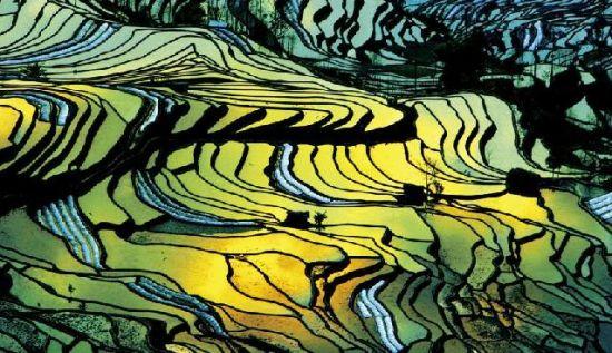 眺望元阳梯田 感悟惊艳的大地艺术图片