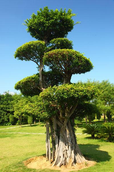 园内绿树造型别致。(图/ 油海慕冰 新浪博客)