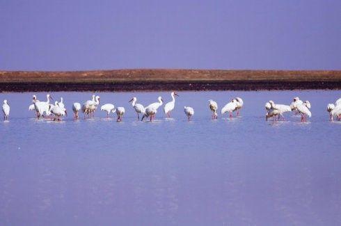 鄱阳湖旅游自驾攻略
