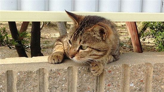 日本第二猫岛
