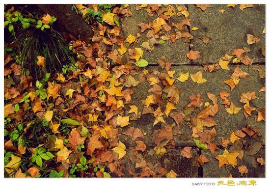 满地金黄的落叶