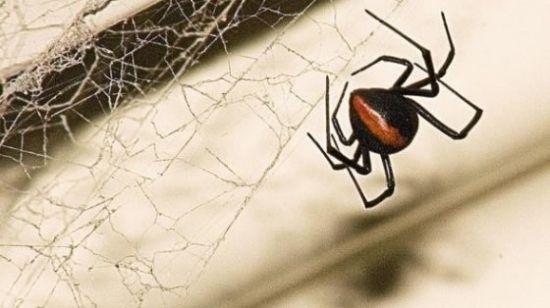 乐高机械结构蜘蛛