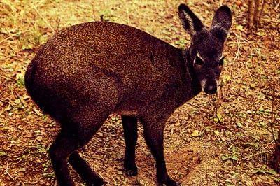 蜂桶寨自然保护区 珍稀动物的惬意时光