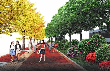 芙蓉路等五条主干道绿化改造后的人行道效果图。