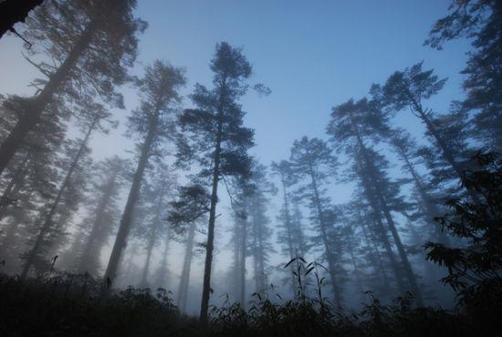 瓦屋山森林公园 巧夺天工奇特景图片