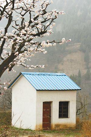 西安杏花村