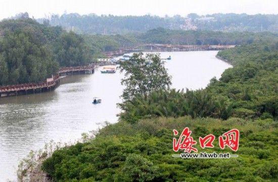 东寨港红树林景区。海口晚报见习记者 石中华摄