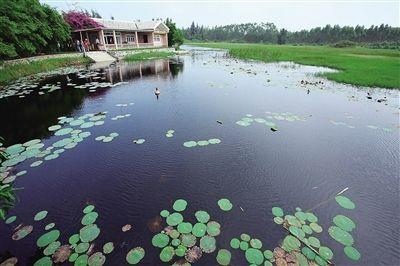 海南另类风景线 海尾湿地公园
