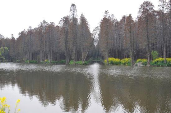 水中奇观 兴化森林公园图片