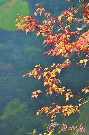 静穆高山森林寻梦 秋水红叶色彩斑斓