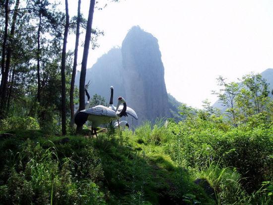"""八仙山保护区的天然林具有原始森林的特点,分多层结构:第一层为高大乔木,第二层为矮乔木,第三层为杂生灌木,第四层为草本植物,第五层为苔藓、地衣、蘑菇,众多藤本植物穿插、攀缘其间,把五个层次和协、有机地联系在一起,形成中国北方罕见的典型、完整的暖温带落叶阔叶林森林生态系统。由于八仙山保护区的森林生态环境优越,不仅各种森林发育良好,长势繁茂,而且还生长有多种藤本植物,其中高大木质藤本植物就有猕猴桃、五味子、南蛇藤、野葡萄等16种之多。科学家把八仙山保护区誉为""""天津的西双版纳""""。"""