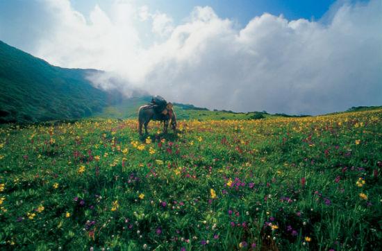九顶山位于龙门山脉中部
