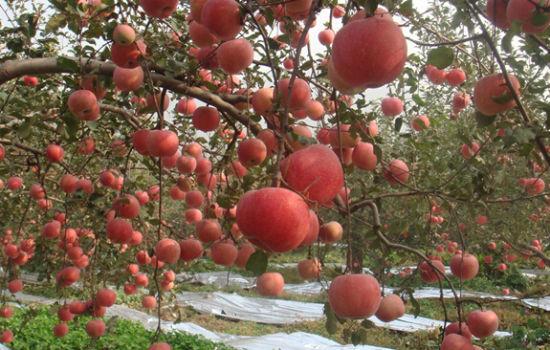新浪旅游配图:大连苹果园 摄影:图片来自网络