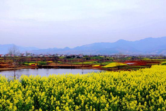 汉中盆地是油菜花的故乡,油菜花的天堂