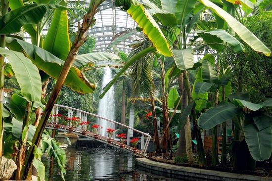 """去津城室内植物园提前享受""""森呼吸"""""""