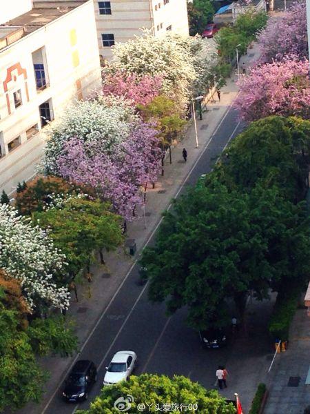最美四月天盘点福州那些美丽的街道