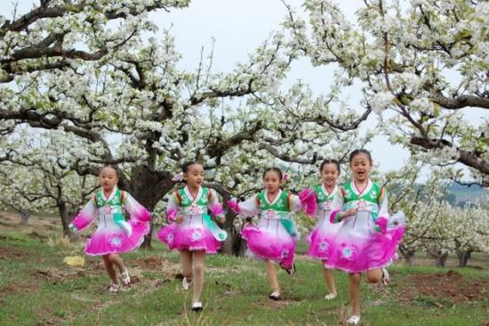 清江梨花节_梨花的海洋 五一去龙井参加梨花节