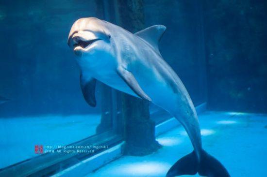 海洋水底小动物短视频