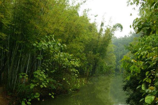 青山绿水,竹林簌簌