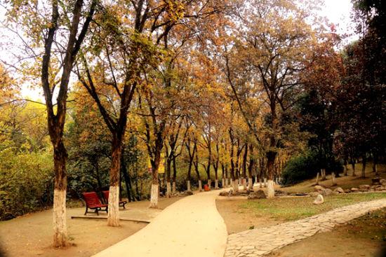 推荐景点:兴庆公园   推荐理由:西安东郊的兴庆宫公园是我国最古老的遗址公园,它位于西安市和平门外咸宁路北,原长安城内的兴庆坊。兴庆宫是唐玄宗朝政的重心,是唐玄宗和杨贵妃长期居住的地方。其设计既继承了我国民族传统风格,又吸收了国外造园的艺术特点。公园中兴庆湖即在原兴庆公中龙池原址建成。