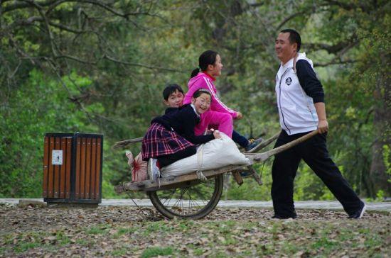 南屏万松林里的独轮车运动会