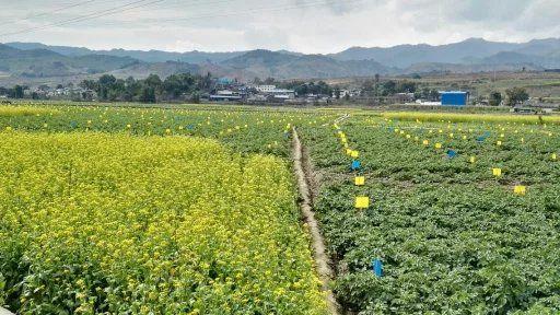 双江自治县沙河乡蔬菜种植基地