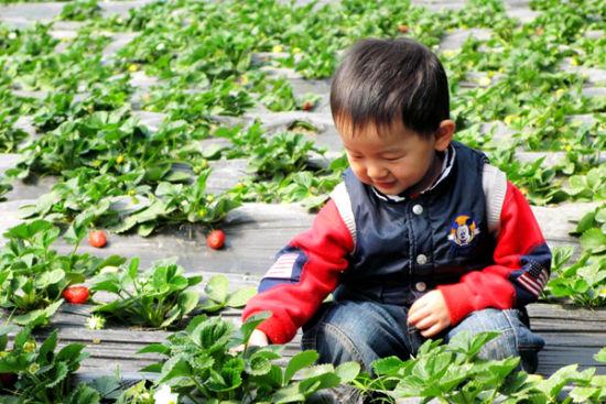 西安周边11个采摘草莓的好去处