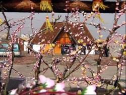 中国青岛赏花节
