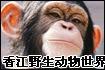 香江野生动物世界