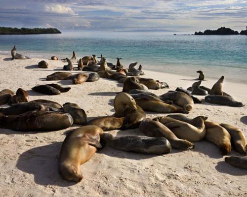 海狮在加拉帕戈斯群岛艾斯潘诺拉的加德纳湾的海滩上休息