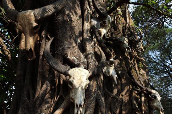 中国最后的原始部落