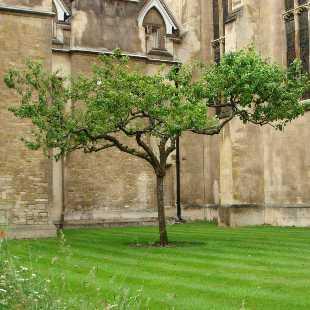 在公元13世纪以前,剑桥还只是沼泽区旁的一个小集市,1209年,牛津发生了大规模的暴乱,一些与当局政见相左的学者逃往剑桥避难,在当时英王亨利三世的庇护下逐渐建立了一些学术组织,并最终于公元1284年成立了剑桥历史上的第一所学院彼得屋学院(Peterhouse)。 时至今日,剑桥已经拥有31个各类学院、科系,学校近800年的历史哺育了牛顿、达尔文等一批引领时代的科学巨匠,哲学家培根、经济学家凯恩斯等贡献突出的文史学者,弥尔顿、拜伦等开创纪元的艺术大师,七位英国首相以及70多位诺贝尔奖获得者,奠定了世界近现