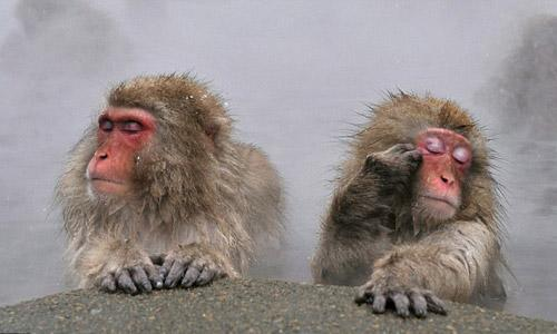两只日本雪猴紧闭双眼,身旁蒸汽缭绕