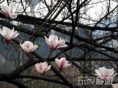 最佳赏花地:颐和园