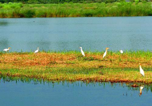 湿地上的鸟群