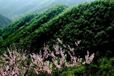 翠枫山自然风景区以自然生态,旅游健身,度假休闲为主题.