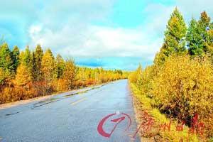 道路两边都是一排黄色秋林