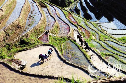 广西龙胜县和平乡田头寨村民在梯田插秧 (新华社图 翁忻�D 摄)
