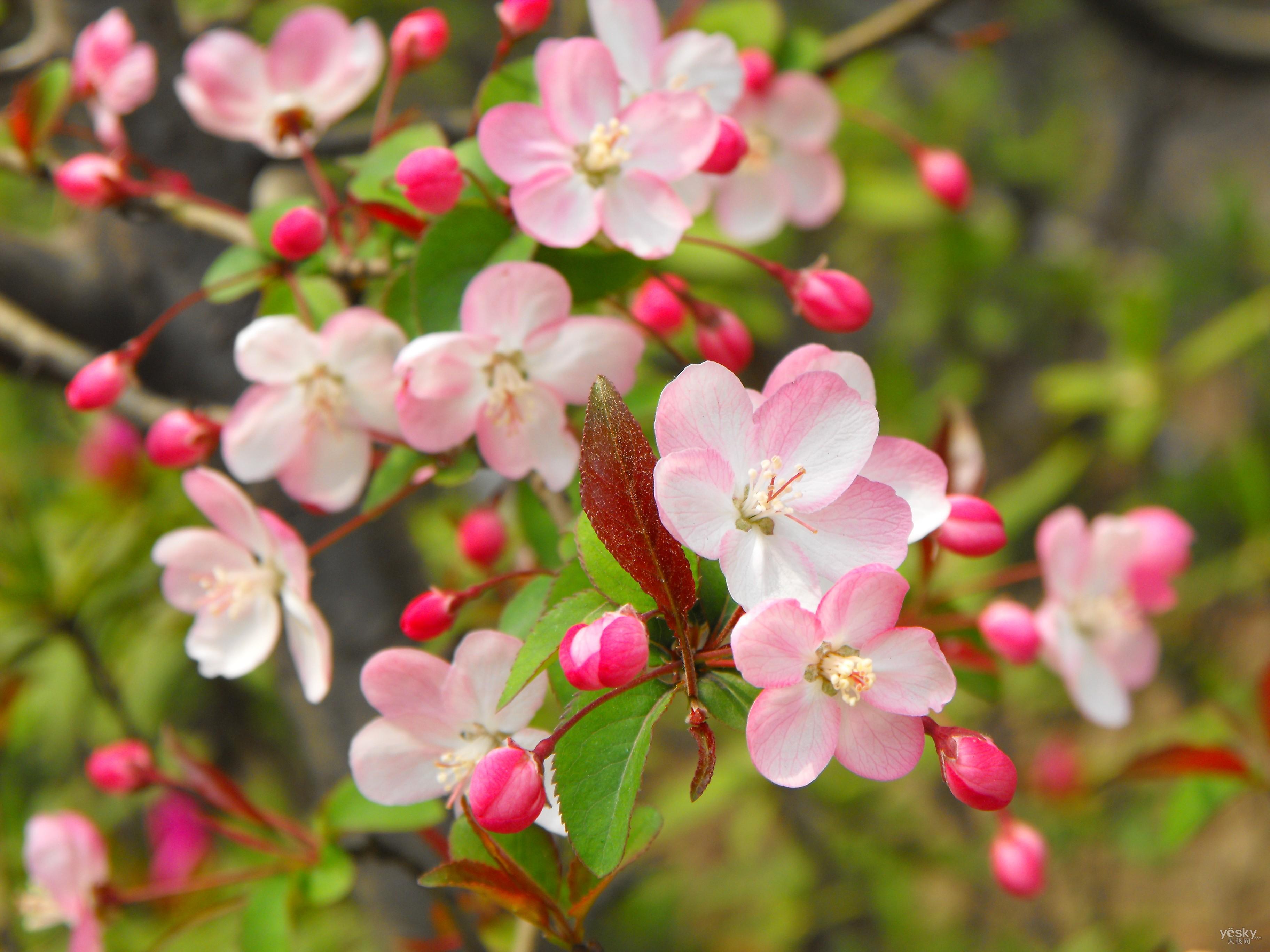 北京春季赏花全攻略