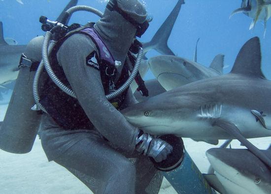 潜水员施催眠术单手摆平鲨鱼。
