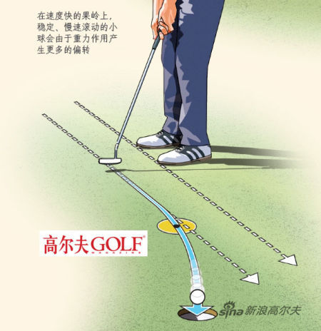 在速度快的果岭上, 稳定、慢速滚动的小 球会由于重力作用产 生更多的偏转