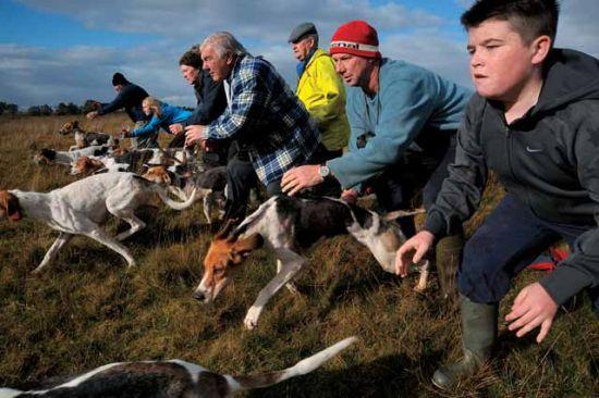 新西兰有着悠久的赛狗历史