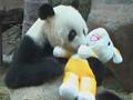 视频-熊猫盼盼再续亚运情 憨态可掬风采不减当年