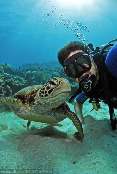 澳大利亚男子潜水与海底动物自拍走红