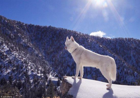 美国男子携爱犬徒步世界,2年走遍各大景点。